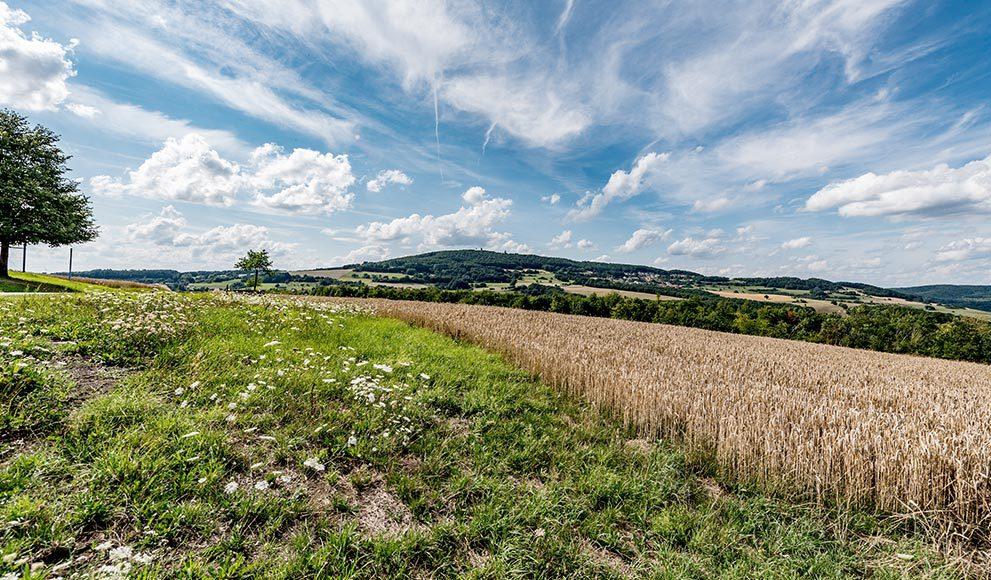 Schöne Pfalz - Landschaftsbild